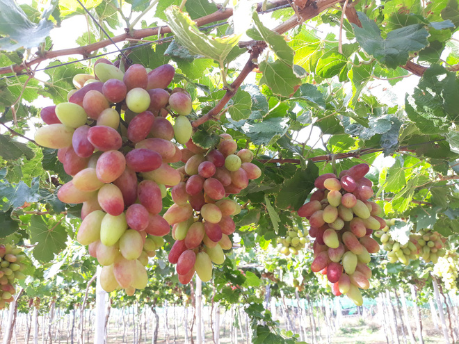 Để được nhất dáng, nhì da: Hãy ăn loại trái cây này để loại bỏ mỡ thừa, tái tạo làn da - Ảnh 4.