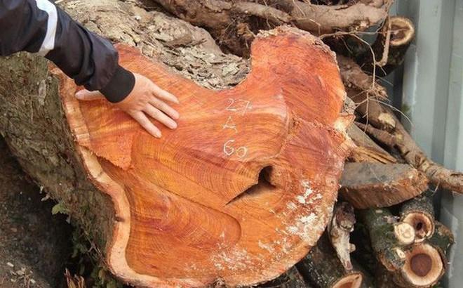 Bất ngờ với nguyên do hoãn đấu giá lô gỗ sưa trăm tỷ ở Chương Mỹ