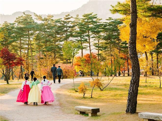 Những con đường ngập tràn cảnh sắc mùa thu ở Seoul - Ảnh 1.