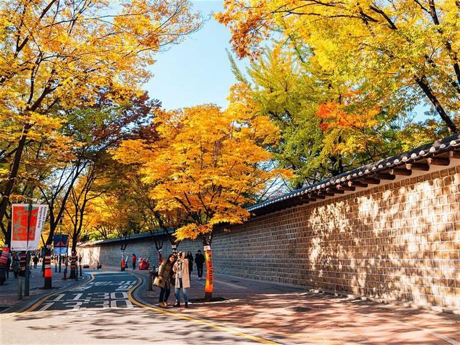 Những con đường ngập tràn cảnh sắc mùa thu ở Seoul - Ảnh 3.