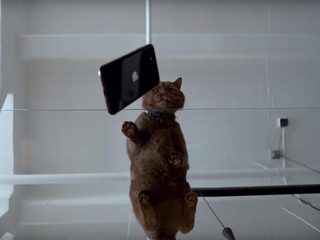 Bí mật thú vị liên quan đến sự kiện ra mắt iPhone 11 ít người để ý - Ảnh 1.