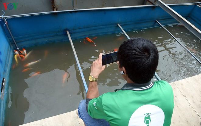 Cá Koi bơi lội khỏe mạnh sau hơn 24h được thả xuống sông Tô Lịch - Ảnh 7.