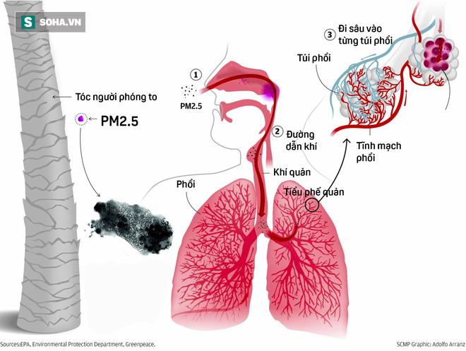 Hà Nội vào top 10 thành phố ô nhiễm không khí tệ nhất TG: Bụi PM2.5 xâm nhập vào máu ra sao? - ảnh 6