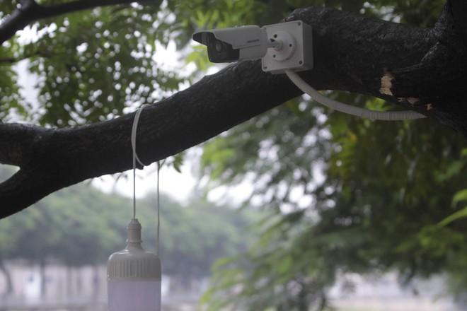 Camera canh giữ ngày đêm, cá koi Nhật vẫn chết trên sông Tô Lịch - Ảnh 5.