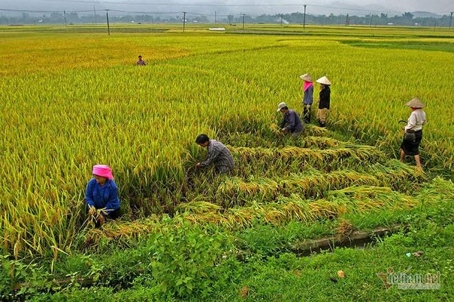 Cảnh sắc đẹp nhất thế giới mỗi năm 1 lần chỉ có ở Việt Nam - Ảnh 12.