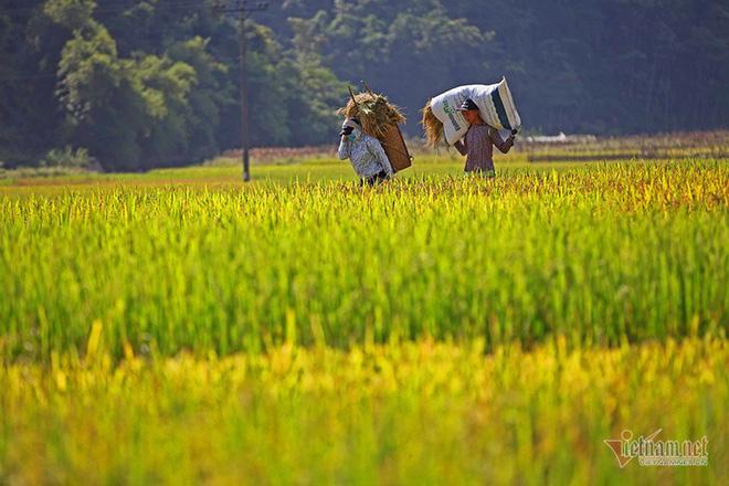 Cảnh sắc đẹp nhất thế giới mỗi năm 1 lần chỉ có ở Việt Nam - Ảnh 9.