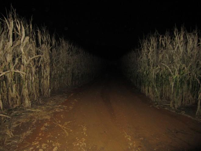 Con gái 16 tuổi thường xuyên lẻn ra ruộng ngô vào nửa đêm, bố mẹ theo dõi thì phát hiện sự thật đau lòng - Ảnh 2.