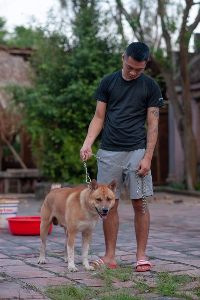 Phim Cậu Vàng chính thức chọn ra 3 chú chó làm diễn viên chính, chó Nhật sẽ đảm nhận những cảnh tâm trạng - Ảnh 4.