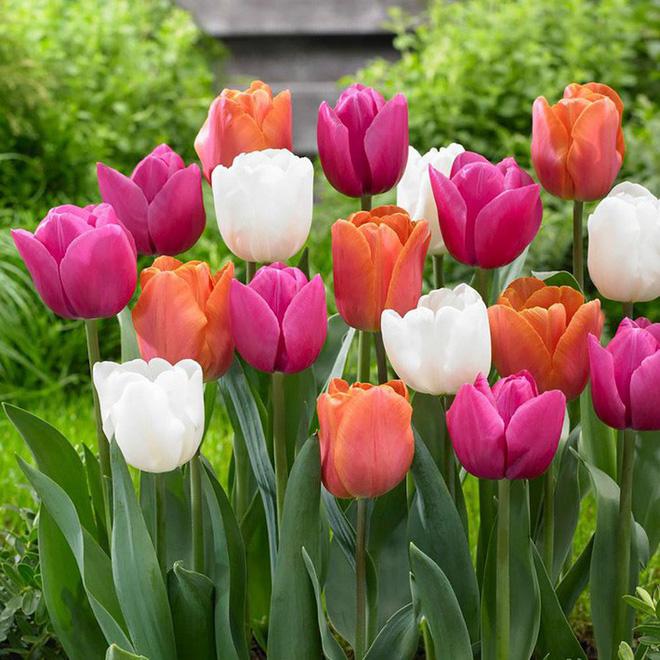 10 loại hoa nếu trồng có thể gây nguy hiểm cho sức khỏe nhưng bạn có thể không biết - Ảnh 1.