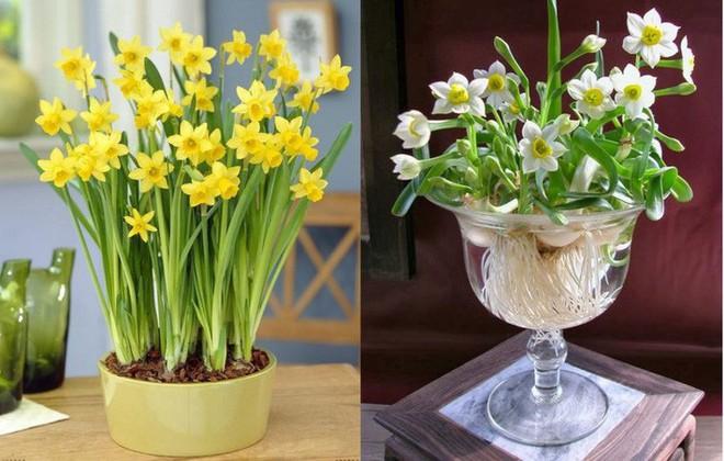 10 loại hoa nếu trồng có thể gây nguy hiểm cho sức khỏe nhưng bạn có thể không biết - Ảnh 3.