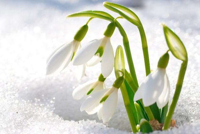 10 loại hoa nếu trồng có thể gây nguy hiểm cho sức khỏe nhưng bạn có thể không biết - Ảnh 6.