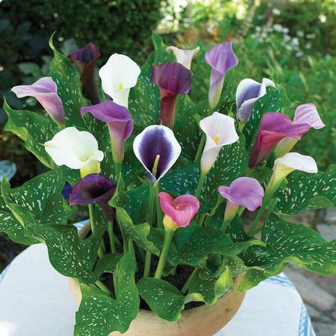 10 loại hoa nếu trồng có thể gây nguy hiểm cho sức khỏe nhưng bạn có thể không biết - Ảnh 8.