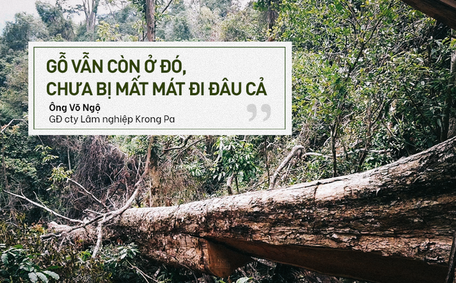 """Bị đục thân, đổ dầu đốt gốc 2 cây gỗ hương cổ thụ chết, chủ rừng nói không thiệt hại vì """"gỗ vẫn còn ở đó"""""""