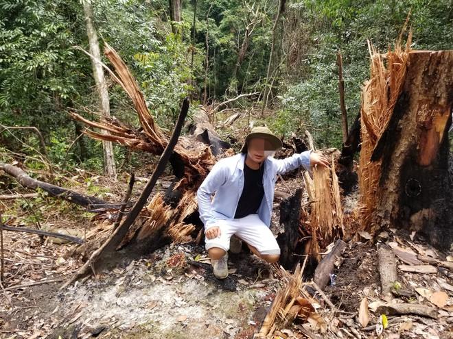 Bị đục thân, đổ dầu đốt gốc 2 cây gỗ hương cổ thụ chết, chủ rừng nói không thiệt hại vì gỗ vẫn còn ở đó - Ảnh 3.