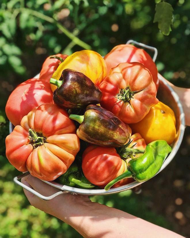 Gặp cô giáo xinh đẹp yêu làm vườn, thích nấu ăn và giấc mơ được trồng rau quả sạch suốt cuộc đời - Ảnh 15.