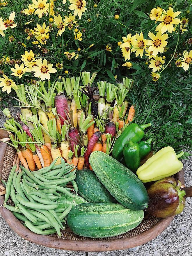 Gặp cô giáo xinh đẹp yêu làm vườn, thích nấu ăn và giấc mơ được trồng rau quả sạch suốt cuộc đời - Ảnh 6.