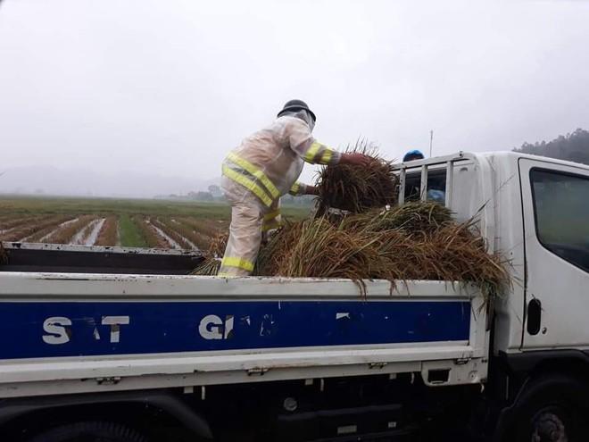 Hàng chục thanh niên tình nguyện ở Hà Tĩnh ra đồng giữa mưa gặt lúa, chạy lũ giúp dân - Ảnh 5.