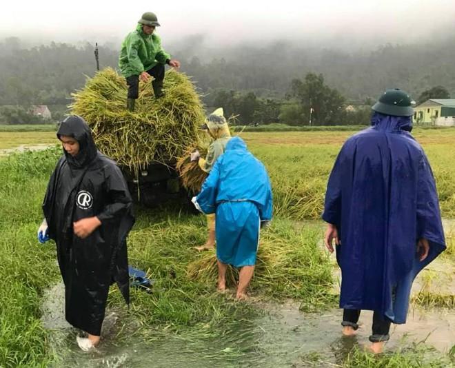 Hàng chục thanh niên tình nguyện ở Hà Tĩnh ra đồng giữa mưa gặt lúa, chạy lũ giúp dân - Ảnh 3.