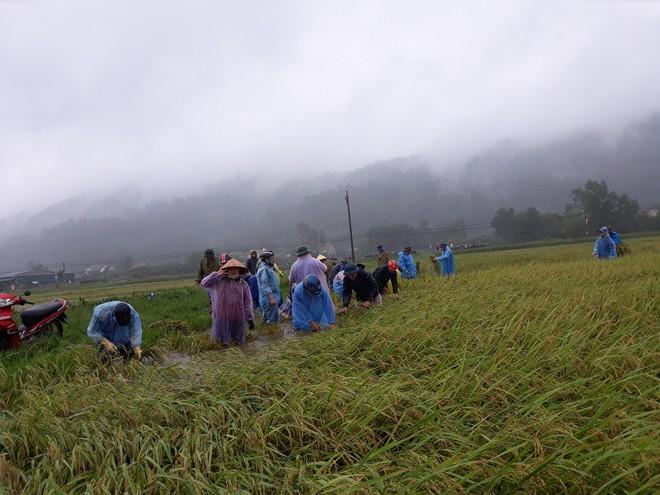 Hàng chục thanh niên tình nguyện ở Hà Tĩnh ra đồng giữa mưa gặt lúa, chạy lũ giúp dân - Ảnh 2.