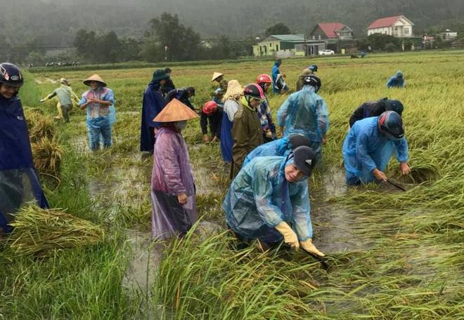 Hàng chục thanh niên tình nguyện ở Hà Tĩnh ra đồng giữa mưa gặt lúa, chạy lũ giúp dân - Ảnh 1.