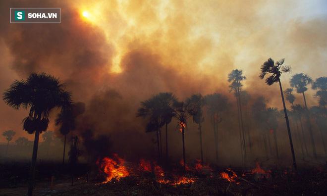 Cháy rừng nhiệt đới Amazon có ảnh hưởng đến sức khoẻ của bạn không? - Ảnh 1.