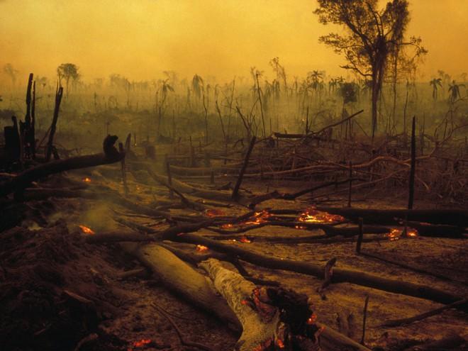 Đừng giết Amazon: Từ lá thư của thủ lĩnh da đỏ đến nguy cơ Amazon tự tử đều rất xúc động - Ảnh 7.