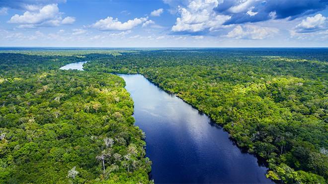 Cháy rừng nhiệt đới Amazon có ảnh hưởng đến sức khoẻ của bạn không? - Ảnh 5.