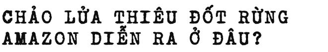 Đừng giết Amazon: Từ lá thư của thủ lĩnh da đỏ đến nguy cơ Amazon tự tử đều rất xúc động - Ảnh 3.