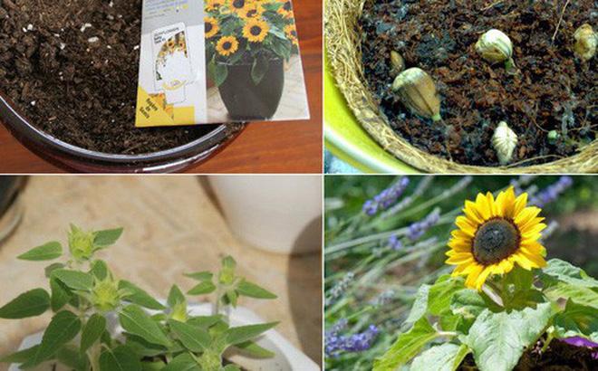 Top 5 loài hoa có ý nghĩa vô cùng đẹp và cách trồng cũng vô cùng dễ