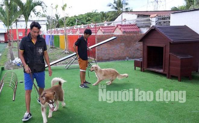 Độc đáo khu phức hợp tiện nghi có massage dành cho chó cưng