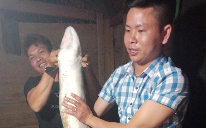 Cá chình 'khủng' dài 1,5 mét mắc lưới ngư dân Quảng Bình