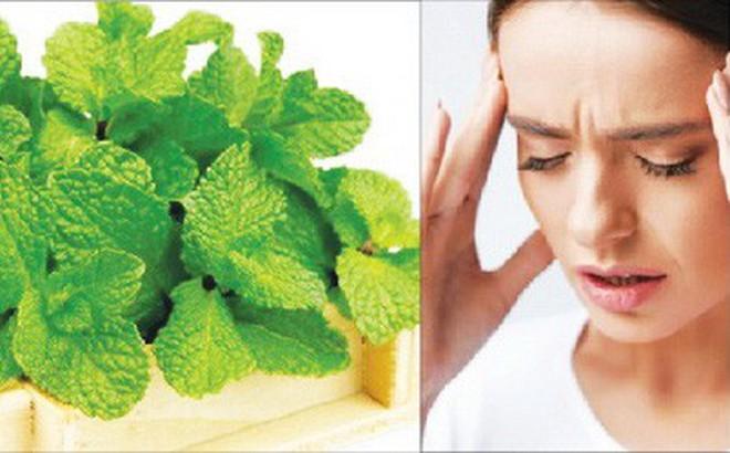 Bài thuốc trị nhức đầu