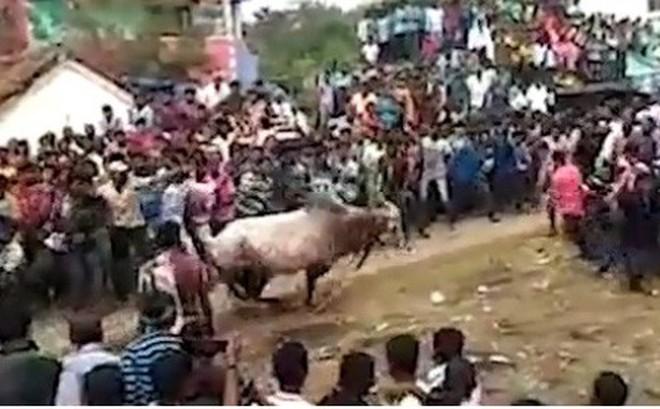 Video: Bò mộng lao thẳng vào đám đông tại sự kiện tôn giáo Ấn Độ