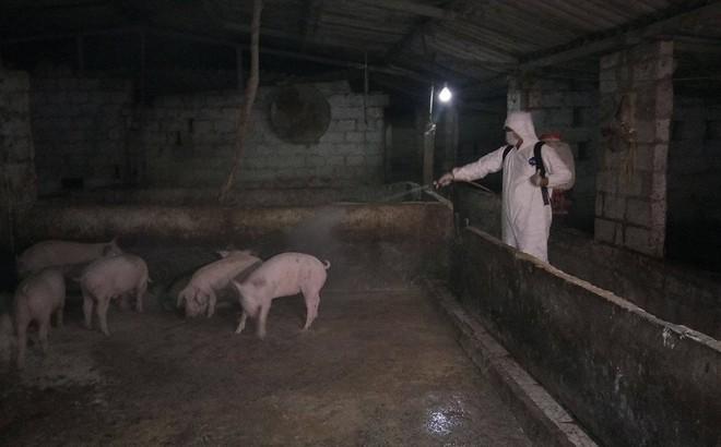 Hải Dương khẩn trương tiêu huỷ gần 200 con lợn mắc dịch tả lợn Châu Phi