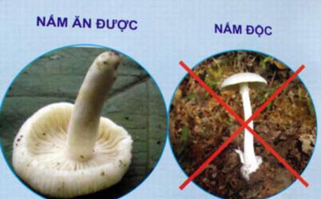 Cách xử trí và phòng ngừa ngộ độc nấm