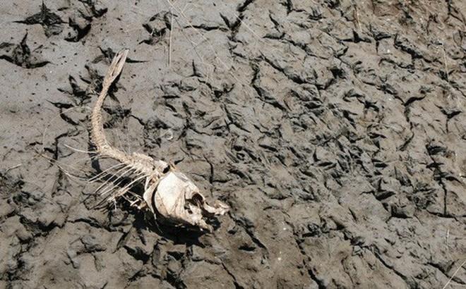 """Đây là 9 dấu hiệu """"ớn lạnh"""" cho thấy nhân loại đã ở giữa kỳ Đại tuyệt chủng lần thứ 6"""