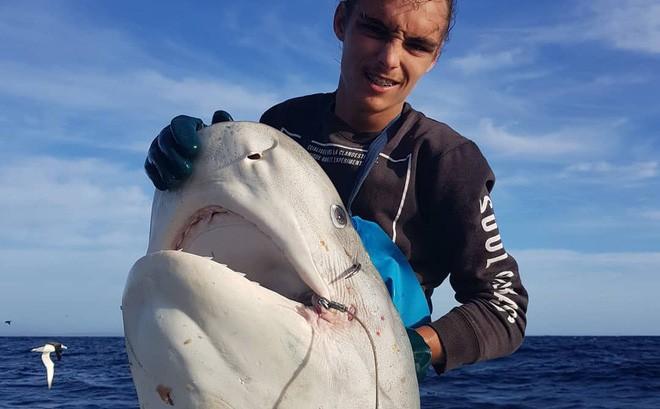 'Thủy quái' làm thịt cá mập khổng lồ, để lại cái đầu trơ trọi