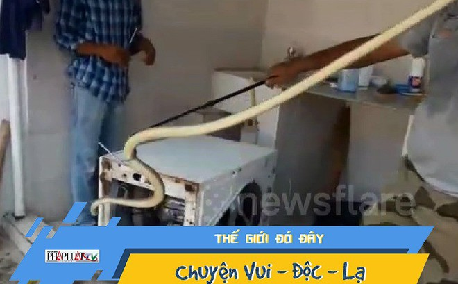 Phát hiện con rắn dài gần 2m trú ẩn trong máy giặt