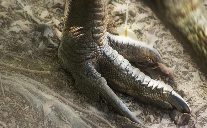Bi kịch người đàn ông trượt chân ngã rồi bị chính con chim mình nuôi đạp chết