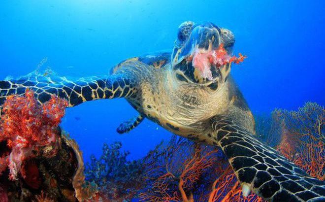 Rùa biển thở bằng phổi, vậy chúng làm thế nào để ăn được dưới nước? Đáp án là sự kỳ diệu của tạo hóa