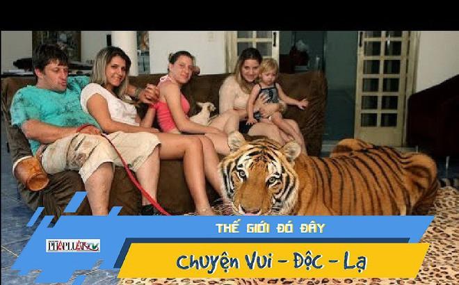 Gia đình nuôi 7 con hổ lớn trong nhà như nuôi mèo