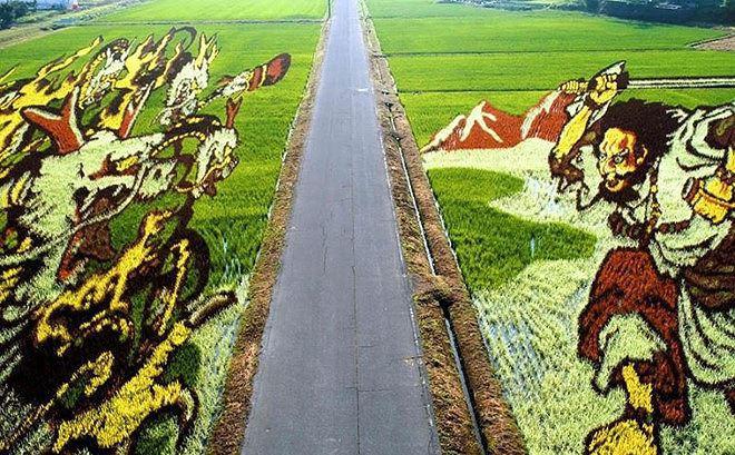 Cận cảnh cánh đồng nghệ thuật được tạo hình kỳ công ở Nhật