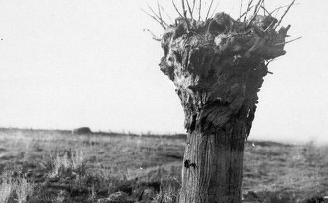 """Đây là phương pháp """"ngụy trang"""" độc đáo cho chòi canh trong Thế chiến thứ Nhất"""