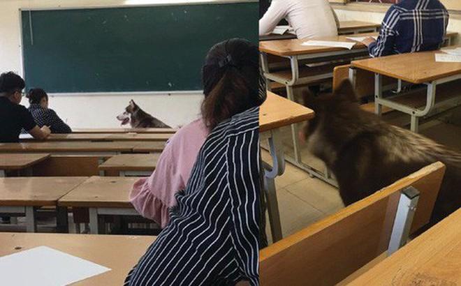 """Xuất hiện bất ngờ trong lớp trong giờ kiểm tra, chú chó khiến sinh viên """"hết hồn"""" vì tưởng trường cử giám thị kiểu mới"""