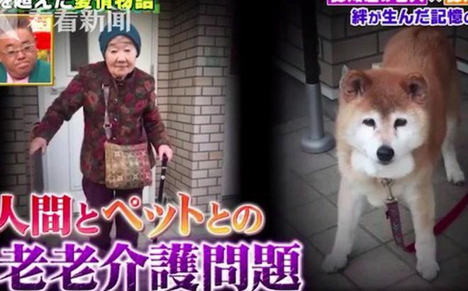 Cuộc đoàn tụ đẫm nước mắt: Cụ bà và chú chó cưng cùng bị mất trí nhớ nhưng vẫn nhận ra nhau sau thời gian dài xa cách