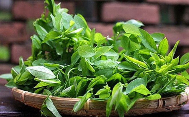 Rau ngót - Cây rau, cây thuốc quý