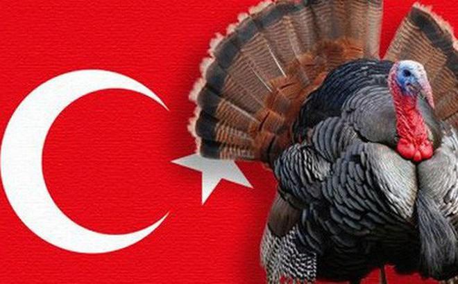 """Con gà """"gây lú"""" nhất quả đất: Người Anh gọi là Thổ Nhĩ Kỳ, nhưng người Thổ Nhĩ Kỳ lại gọi tên Ấn Độ"""