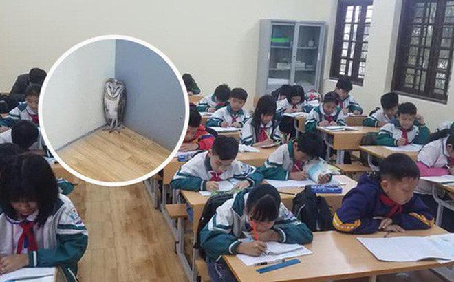 Chim cú lợn bay nhầm vào lớp học: Được phong làm giám thị, thậm chí, học sinh ví như thú cưng trong Harry Potter