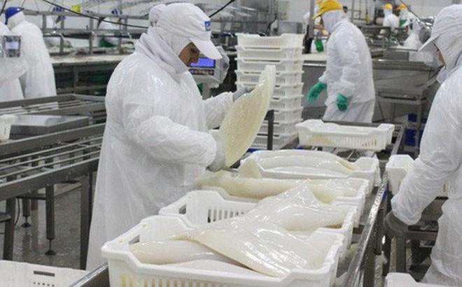 Hàn Quốc là thị trường tiêu thụ mực, bạch tuộc lớn nhất của Việt Nam