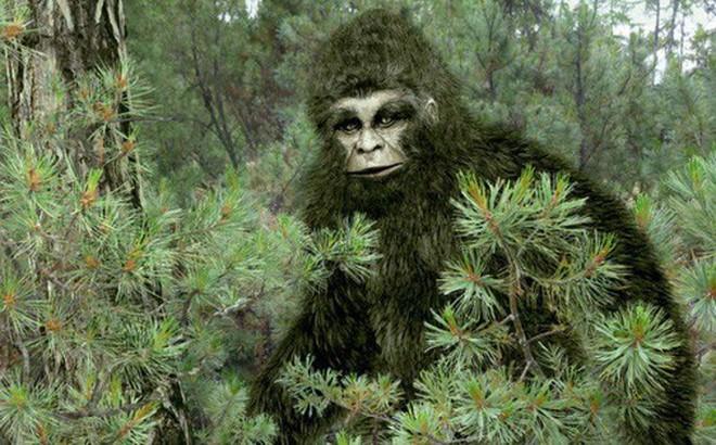 Người đàn ông gửi lông Bigfoot cho FBI đòi phân tích, 40 năm sau mới nhận được đáp án lúc gần đất xa trời